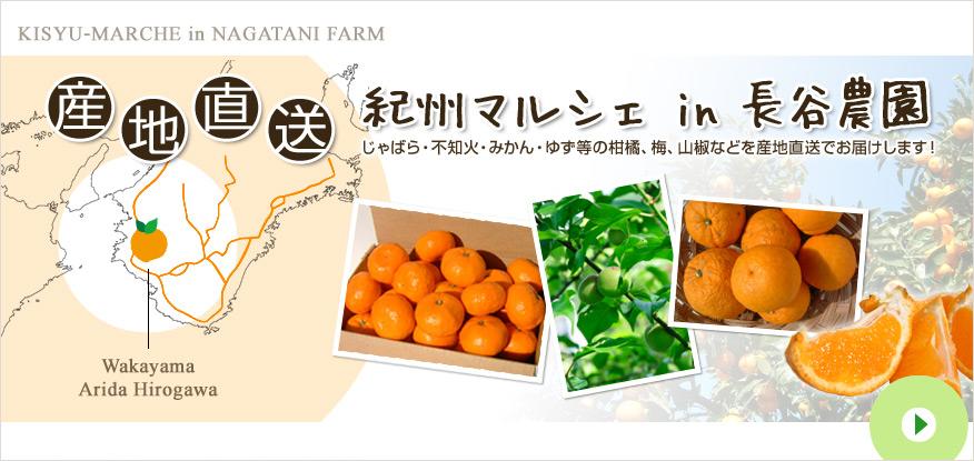 紀州マルシェ in 長谷農園